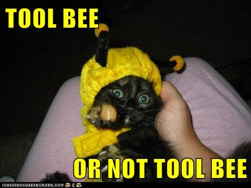 TOOL BEE  OR NOT TOOL BEE
