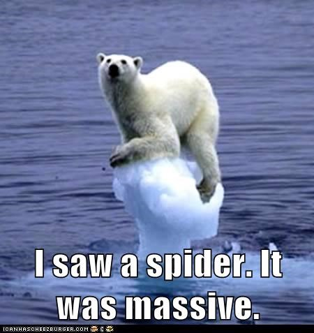 eek,ice,massive,melting,polar bear,polar bears,scared,spider