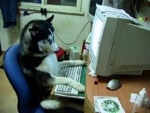 disney,dogs,dog with a blog,regular,sitcom,tv news,tv show
