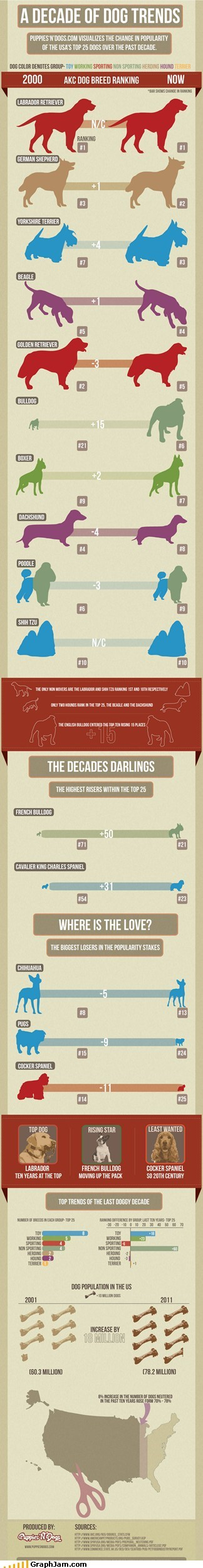 breed,dogs,infographic
