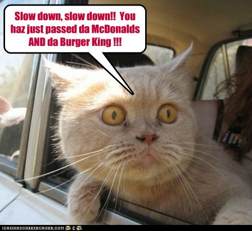 Slow down, slow down!!  You haz just passed da McDonalds AND da Burger King !!!