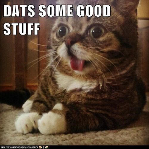 cat,cat nip,derp,drugs