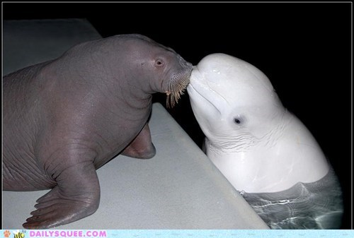 Daily Squee: Boop!