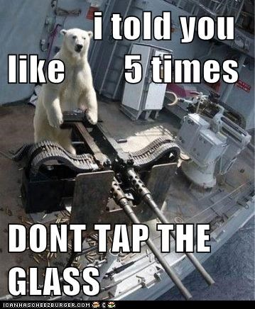 annoyed,dont,fed up,glass,gun,i told you,polar bear,polar bears,tap,tap the glass