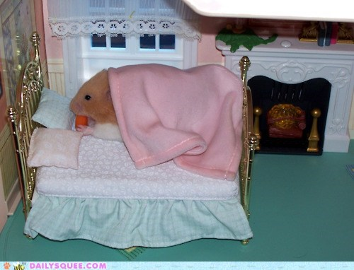 bed,beds,breakfast in bed,carrot,carrots,doll house,hamster,hamsters,squee