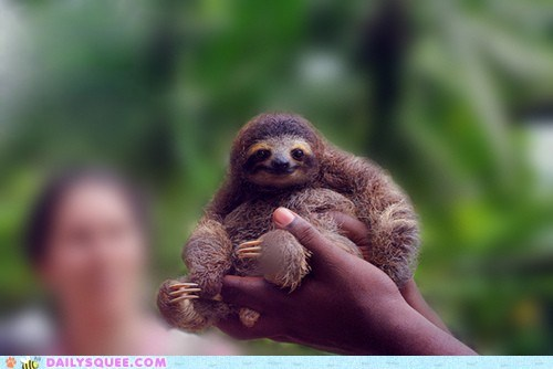 handful,hands,holding,offer,sloth,sloths,smile