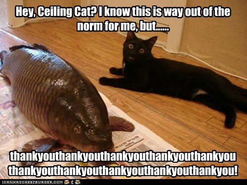 Hey, Ceiling Cat? I know this is way out of the norm for me, but...... thankyouthankyouthankyouthankyouthankyouthankyouthankyouthankyouthankyouthankyou!