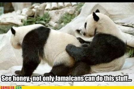 Even the pandas:l