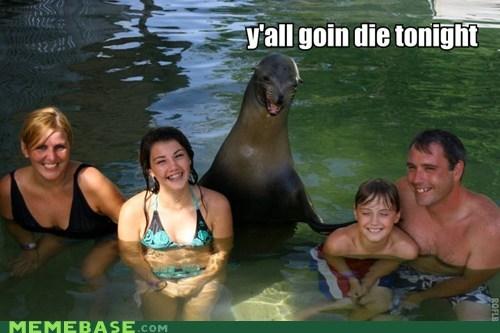 Death,killer,murder,pool,seal,SOON