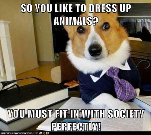 SO YOU LIKE TO DRESS UP ANIMALS?  YOU MUST FIT IN WITH SOCIETY PERFECTLY!