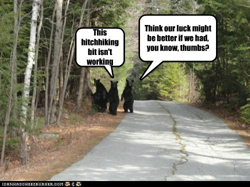 bears,hitchhiking,not working,thumbs,traveling,woods