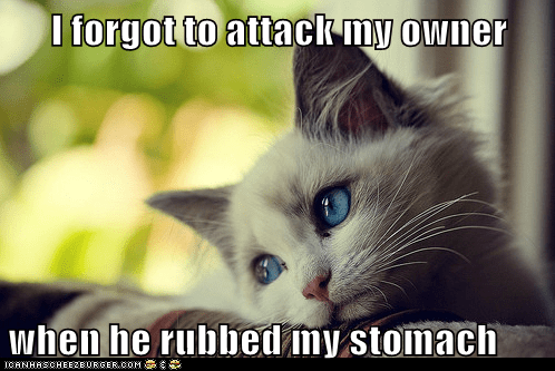 attack,Cats,first world cat problems,forgot,Memes,Sad,stomach,tummy,whining