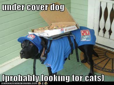 under cover dog  (probably looking for cats)