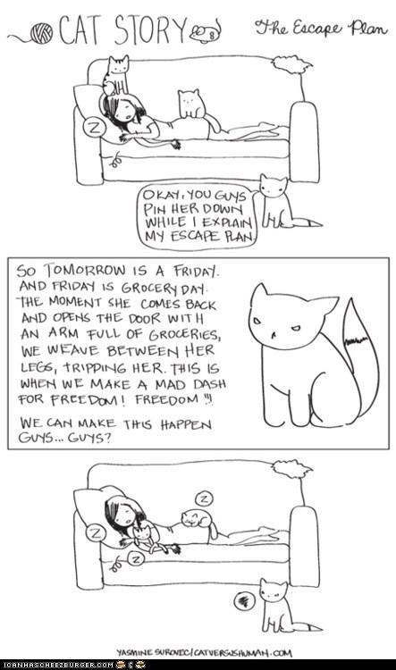 cat versus human,Cats,comic,comics,escape,FAIL,freedom,plans,schemes,sleep,sleeping