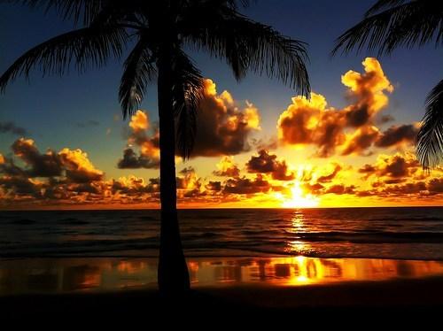 beach,ocean,Palm Tree,sunrise