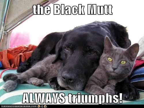 the Black Mutt  ALWAYS triumphs!