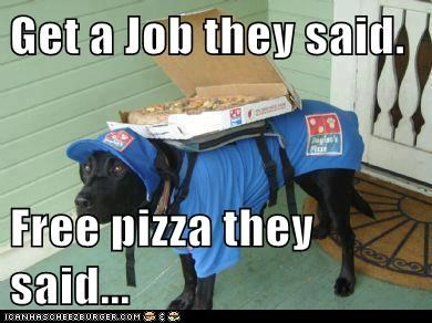 dogs,job,labrador,pizza
