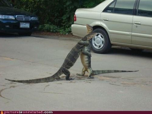 hug it out,komodo dragon,lizard,wtf
