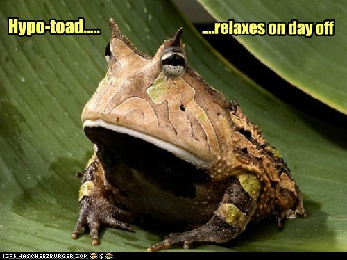 break,day off,glory,hypnotoad,relax,tired,toad