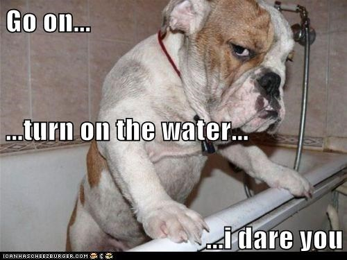 bath,best of the week,bulldog,dogs,Hall of Fame,i dare you