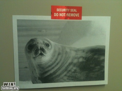 clever,pun,seal,security