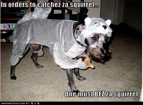 dogs,squirrel,what breed