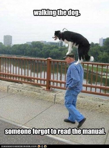 best of the week,dogs,doing it wrong,Hall of Fame,what breed
