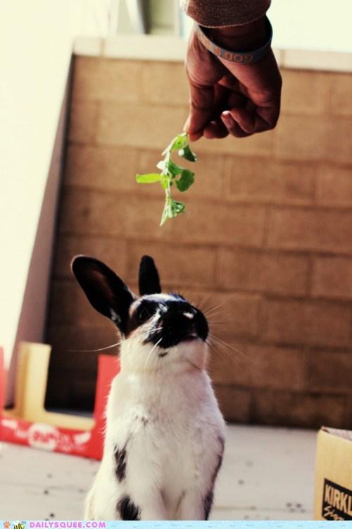 bunny,feed,food,greens,hand,rabbit,snack