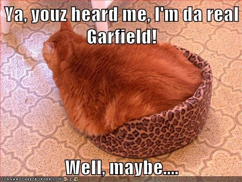 Ya, youz heard me, I'm da real Garfield!  Well, maybe....