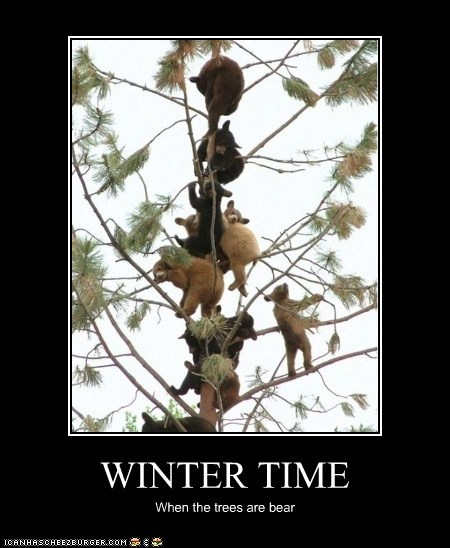 bare,bears,climbing a tree,puns,seasons,tree,winter