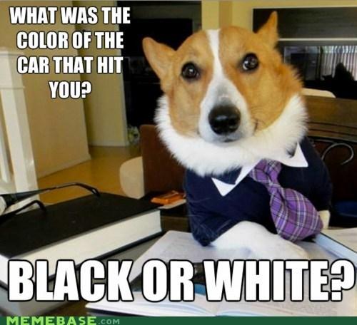 advice dog,black,colorblind,Lawyer Dog,white