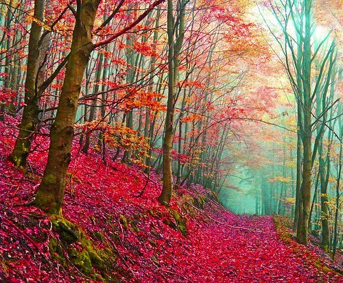 Forest,Hall of Fame,Italy,path,red