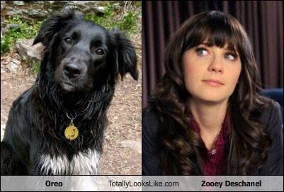 Oreo Totally Looks Like Zooey Deschanel