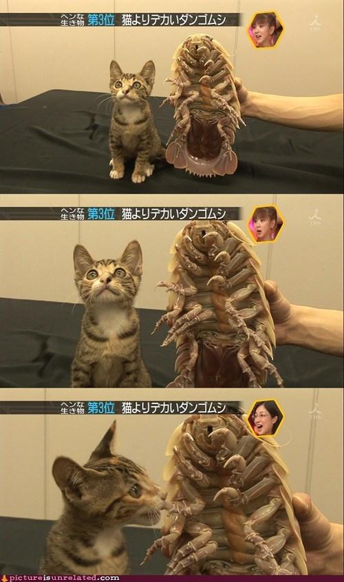hungry,kitty,om nom nom,wtf