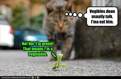Cats,eat,fool,green,last resort,praying mantis,vegetables