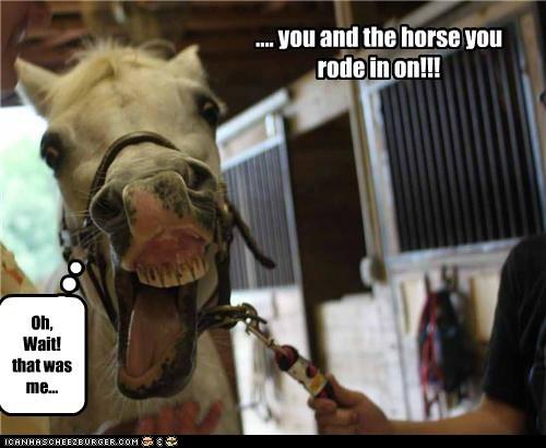 arguments,comebacks,derp,face,horse,insult,wait