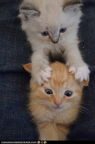 brains,Cats,claws,cyoot kitteh of teh day,kitten,paws,playing,two cats