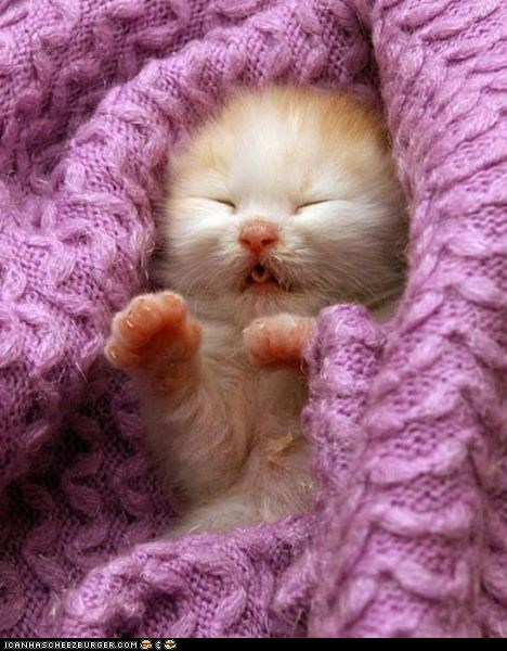Cyoot Kitteh of teh Day: Tucked In and Toasty