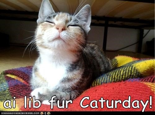 ai lib fur Caturday!