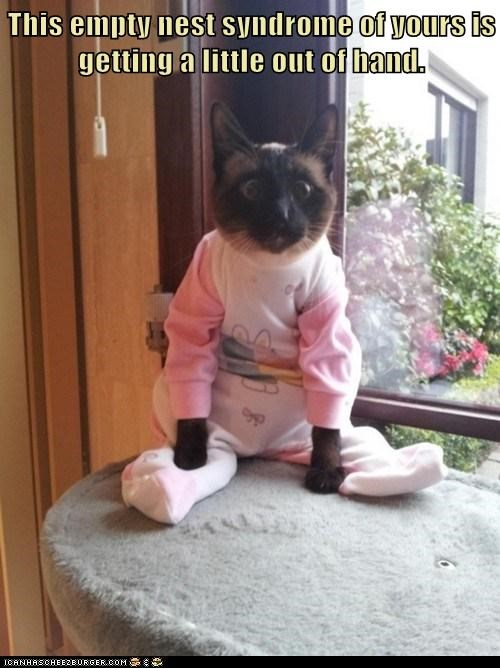 best of the week,Cats,child,college,do not want,dressed up,empty nest,kids,lolcats,mom,moms,parent,parents