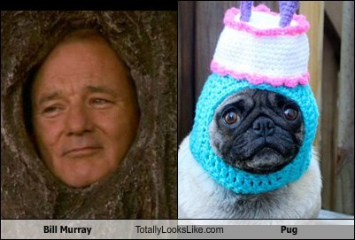 Bill Murray Totally Looks Like Pug