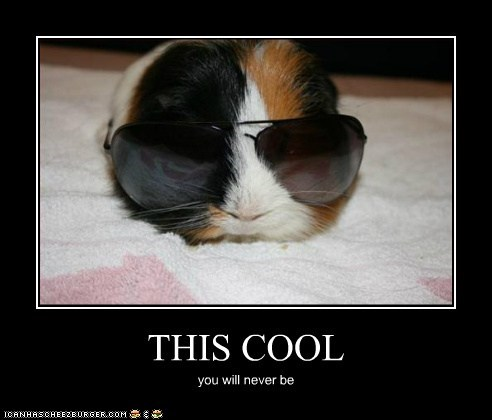 best of the week,cool,guinea pigs,Hall of Fame,how we roll,never,sunglasses