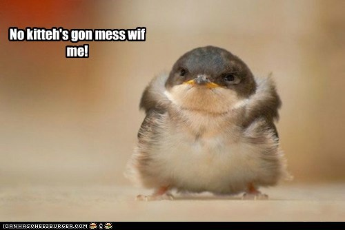 baby bird,bird,fluff,front,kitteh,strong,tough