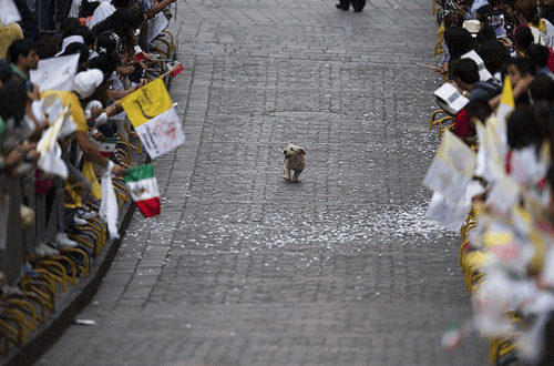 Solo Dog Parade of the Day