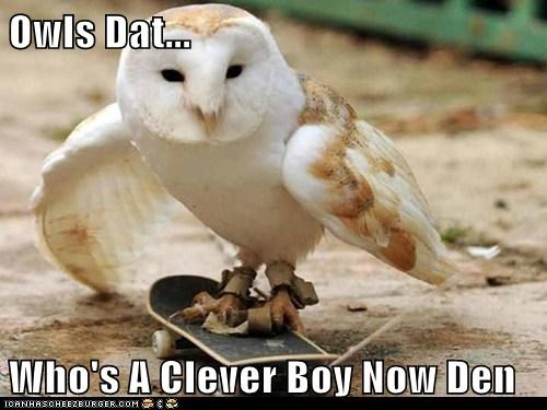 Owls Dat...  Who's A Clever Boy Now Den