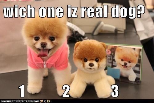 wich one iz real dog?       1            2             3