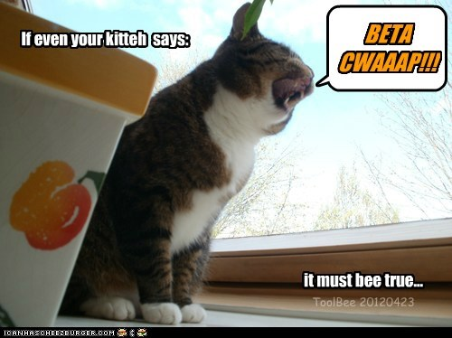 Smart kitteh, ai has wun...