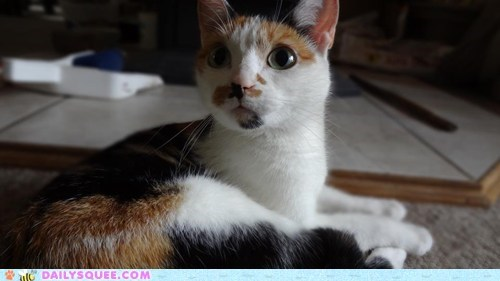 Reader Squees: Bright-Eyed Kitty