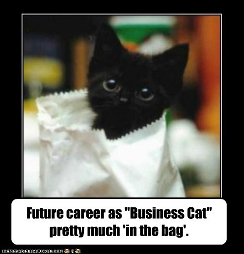 "Future career as ""Business Cat"" pretty much 'in the bag'."