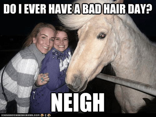 bad hair day,neigh,puns,ridiculously photogenic g,ridiculously photogenic h